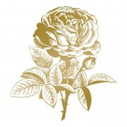 Couture Creations - Anna Griffin - Foil Stamp Die - Classic Rose