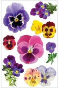 3D Stickers Glitter - Pansies - Paper House